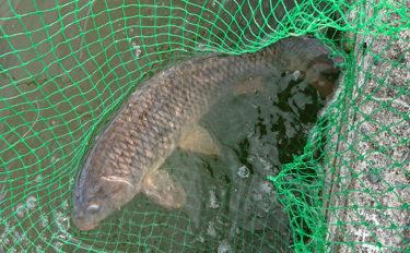 釣り経験者がハマる『コイ釣り堀』 釣れない時の対処法3選【赤塚釣堀】