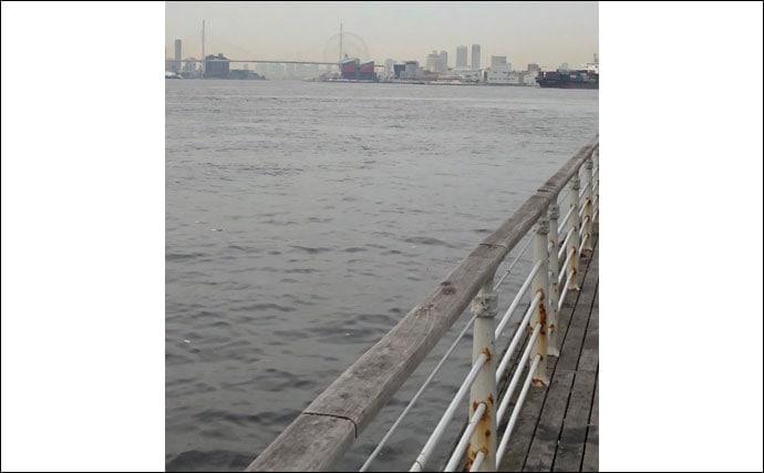 【大阪湾2020】アジングタックルでのチヌ攻略法 良型多く当たり年か