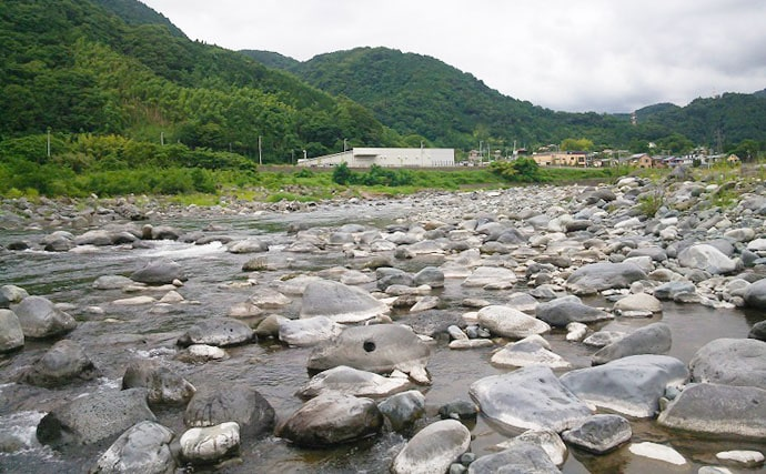 【2020】アユのトモ釣りオススメ河川:酒匂川 魚影の濃さに定評あり