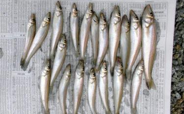 投げキス釣りで17cm頭に19匹 シーズン突入を実感【三重・神前海岸】