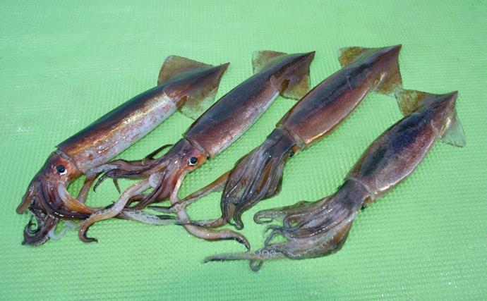 スルメイカの漁獲量が5年間で3分の1に減少 理由と今後の展望について