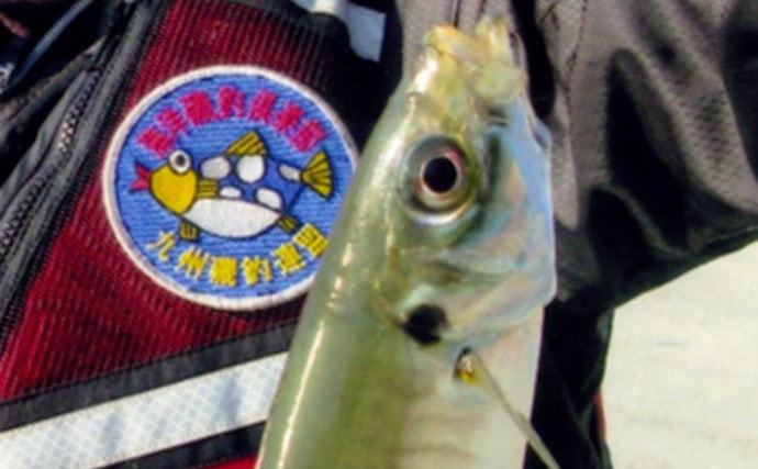 波止からのフカセ釣りで28cm頭にアジ50尾の入れ食い堪能【大分・津久見】