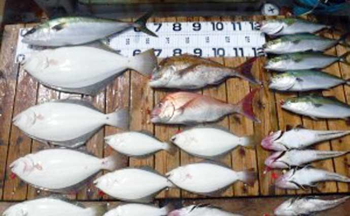 【愛知・三重】船釣り最新釣果 大型抱卵イサキ狙いの絶好機到来