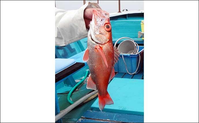 「中深海」釣りでアカムツ・アラ・オニカサゴ高級魚三昧【静岡・わし丸】