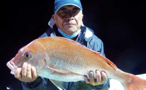夜焚きイカで釣れたスルメ泳がせ4kgマダイをキャッチ【福岡・太陽丸】