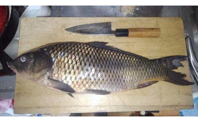 魚介類の「食べるな危険」部位:コイの胆嚢は猛毒 死に至る可能性も