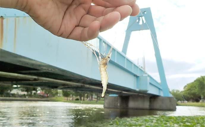テナガエビ釣りで5cm級13尾 脱皮したて多く時期尚早【東京・水元公園】