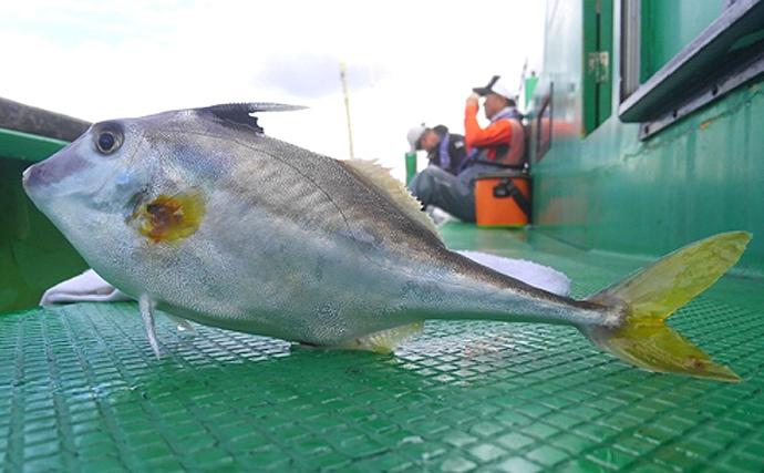 身近だけど知名度が低い「銀馬」ってなんの魚? 肝はカワハギ級で美味