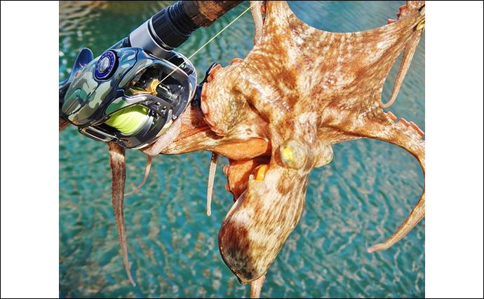 波止エギタコ釣りで300g頭に2杯 感度重視のタックルがキモ【四日市港】