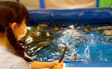 室内釣り堀でファミリーフィッシング 美コイに子供も大興奮【埼玉】