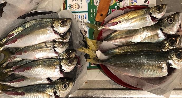 『大阪湾アジ』美味しさランキングTOP3 水の透明度とは比例せず?