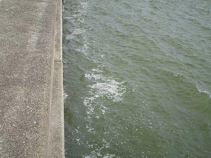 落とし込み釣りでチヌ45cm 当て潮差して気配上昇【和田防沖新波止】