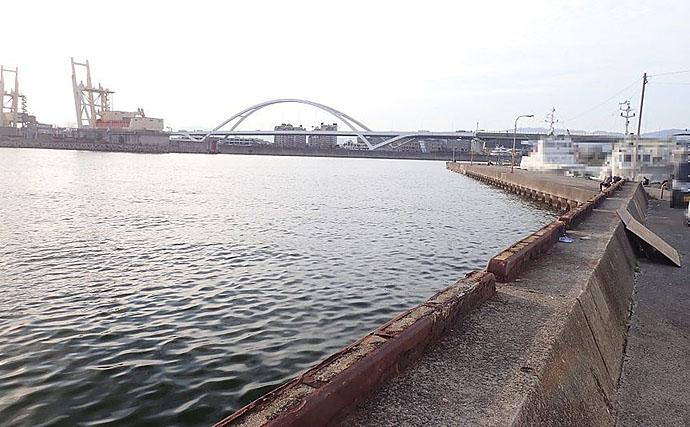 2020年は当たり年の予感 タコジグ使った波止マダコ釣りで3杯【大阪】