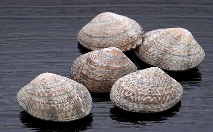 播磨灘沿岸域でアサリから『貝毒』検出相次ぐ 「二枚貝は採取しないで」