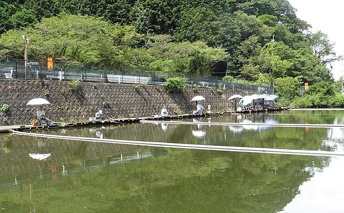 管理釣り場で大型ヘラブナ狙い 暑さ本番で食い本格化【FC竹の内】