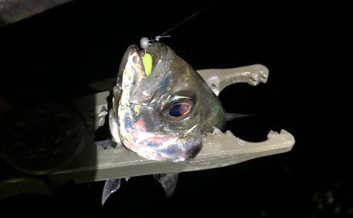 大阪湾ライトゲーム 「岩礁帯」「温排水」「テトラ」にて多魚種を攻略