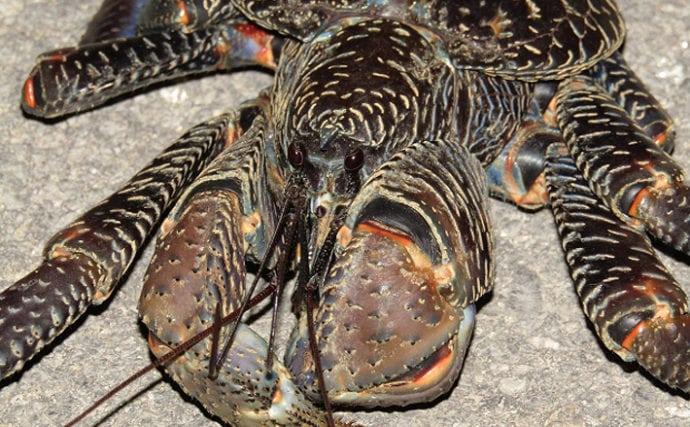 魚介類の「食べるな危険」部位:ヤシガニの「消化管」が猛毒を持つワケ