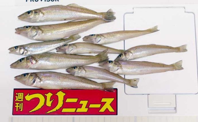 投げ釣りでシロギス狙い 18cm頭に30尾オーバー【大分・羽根港】
