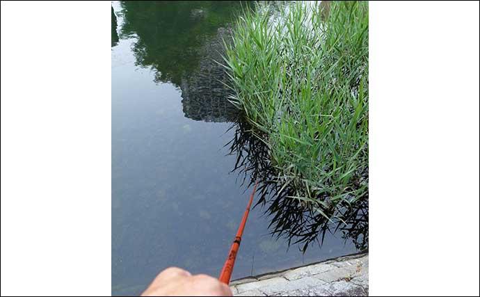 都心で楽しむハゼ釣り 小型中心ながら25尾をキャッチ【佃堀】
