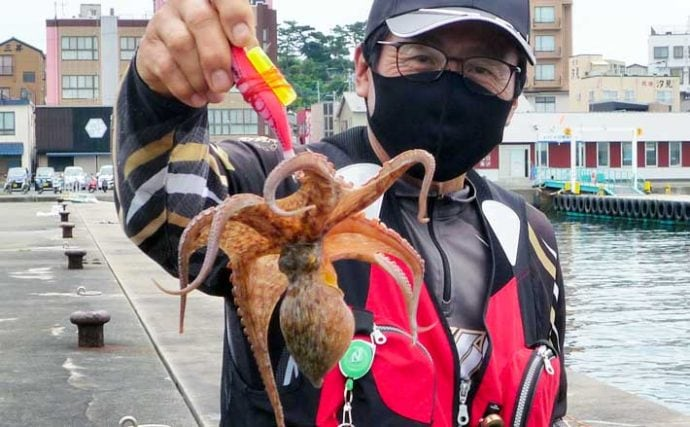 波止でのエギタコ釣りで本命9匹 ちょい投げで良型【愛知・日間賀島】