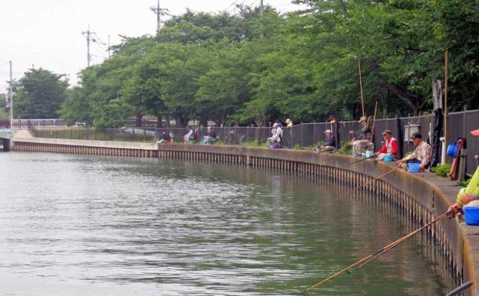 今週のヘラブナ推薦釣り場【埼玉県・逆川】 アクセス抜群で魚影も濃い