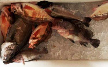 スロージギングで幻の魚『アラ』を狙う 潮流に合わせたジグ選択がキモ