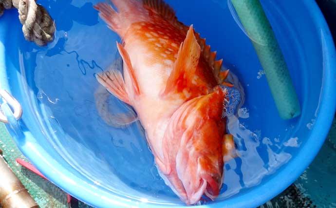 遠州灘で本命アラ顔見せ ゲストに高級魚オニカサゴ【静岡・わし丸】