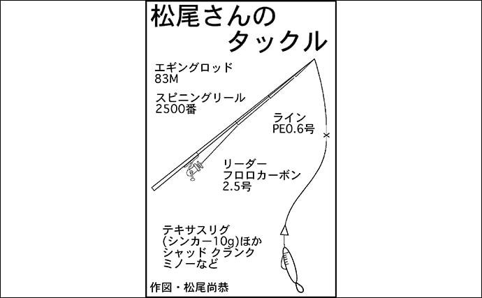 ロックゲームで30cm超えキジハタ浮上 フォールに好反応【福井・敦賀】