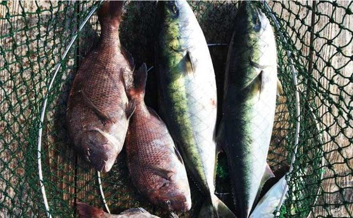 【神奈川2020】海上釣り堀「みうら海王」メインターゲット3種攻略法