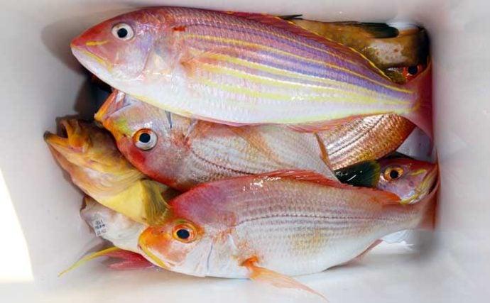 【九州2020】人気の『タイ五目』釣り入門 多彩釣果で初心者にもオススメ