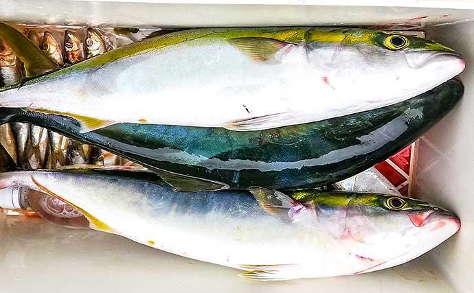 伊良湖沖『泳がせ釣り』で80cm大型ヒラメ連続浮上【愛知・昭徳丸】