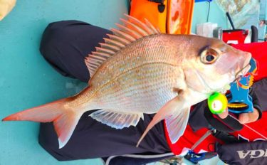 マイボートで泳がせ&ルアー釣り タイラバに大物ヒットも【五ケ所湾】