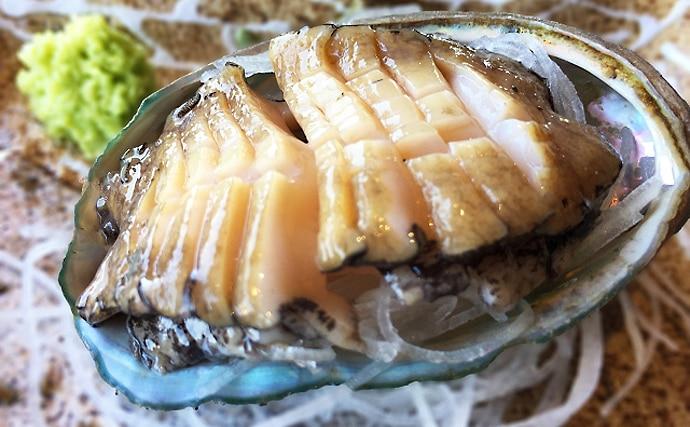 アワビの天然物・養殖物の見分け方 「殻の色」を見れば一目瞭然?