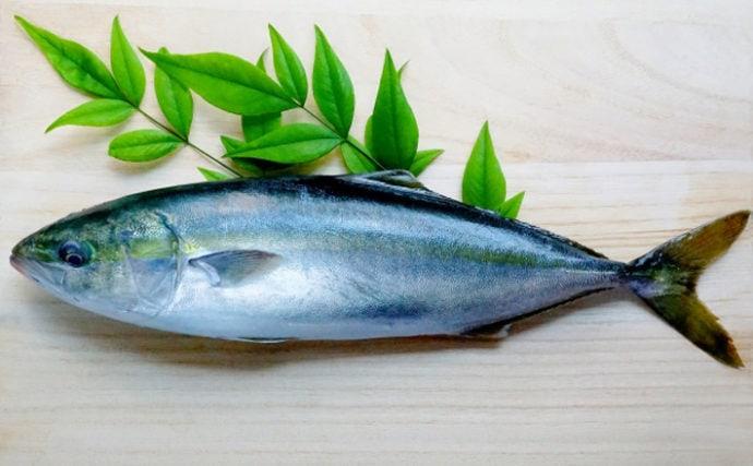 ブリは国内養殖の先駆け魚 養殖物と天然物の見分け方は脂のノリ方?