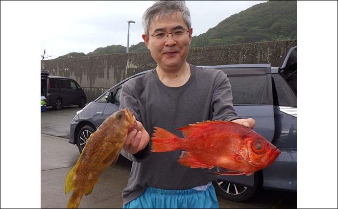 小アジ「泳がせ釣り」でキジハタ17尾 好ゲストはヒラメ【新潟・大進丸】