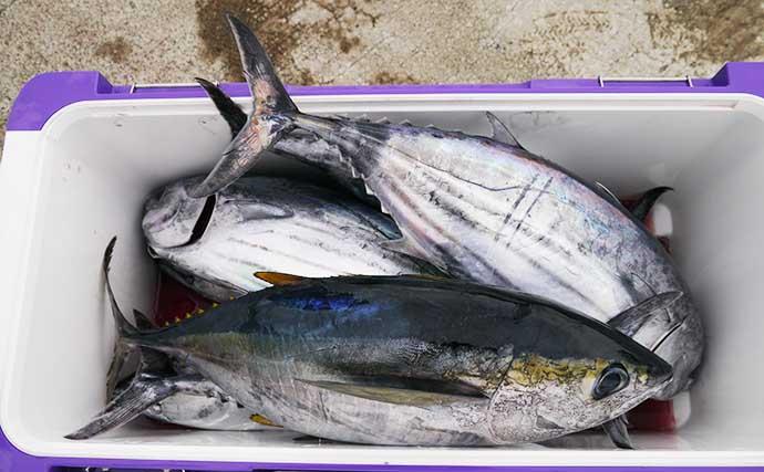 初めての釣りで大物狙いたいなら『コマセマグロ・カツオ』釣りで決まり