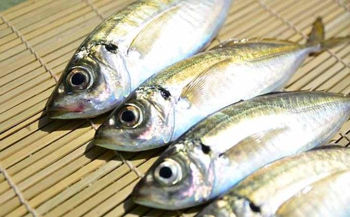初めての釣りで「魚をたくさん釣りたい」なら船のアジ釣りで決まり