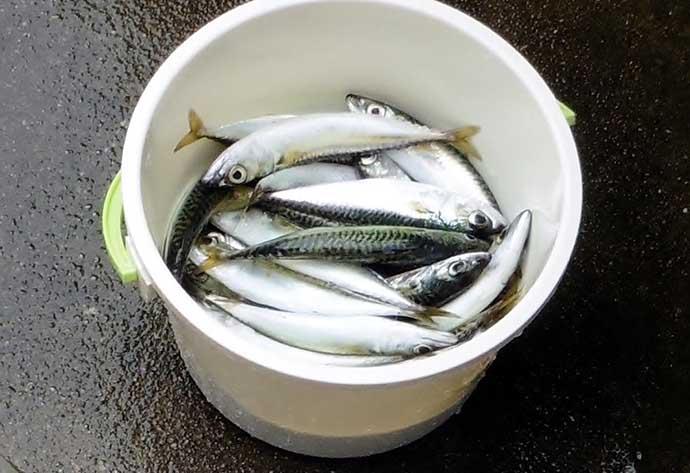 【大阪南部2020夏】ファミリーフィッシング好釣り場紹介 サビキに最適