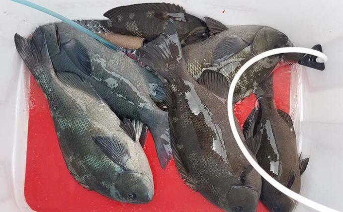 磯フカセ釣りで38cm頭に10匹 ハゲバリで『わきグレ』攻略【市江】
