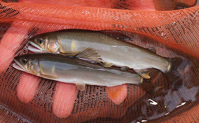 『天然ウナギ』釣りに有効なエサ5選 採取方法&効果的な状況も解説