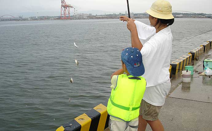【2020夏】誰でも出来るサビキ釣り 釣果を伸ばす3つの工夫を紹介