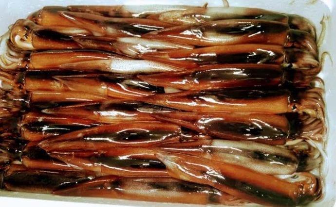 プロが教える「旬魚」の見分け方:スルメイカ 体色の変化がヒントに