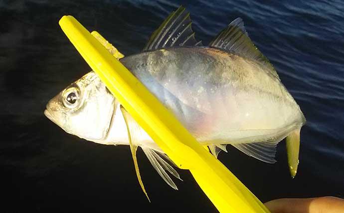 『フィッシュグリップ』が必要な陸っぱりルアーフィッシング対象魚5選