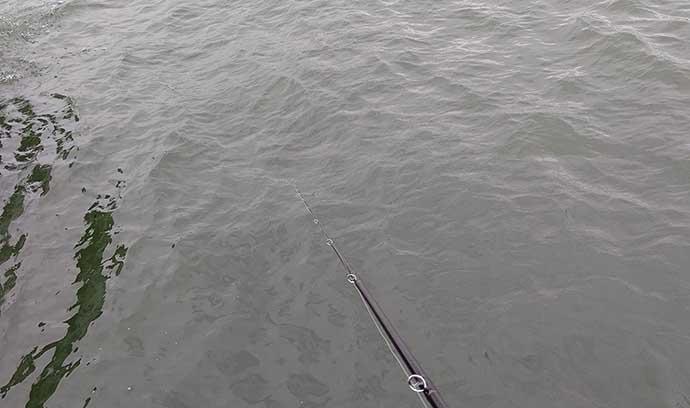 陸っぱりハタ&タコリレー釣行 タックル流用で本命マダコ手中【清水港】