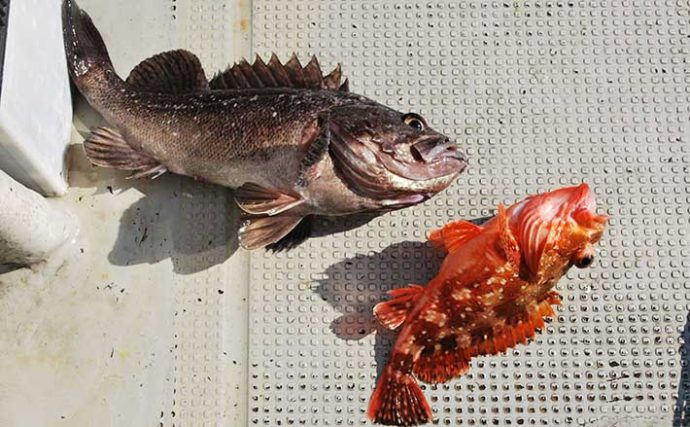 家族で釣りを始めるなら「船釣り」で決まり 釣りモノ選びのコツとは?