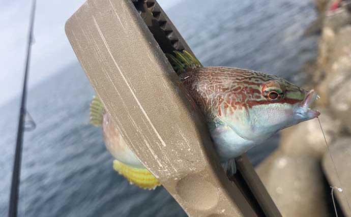 胴つき仕掛けで10魚種チャレンジ釣行 釣果を伸ばすためのコツとは?