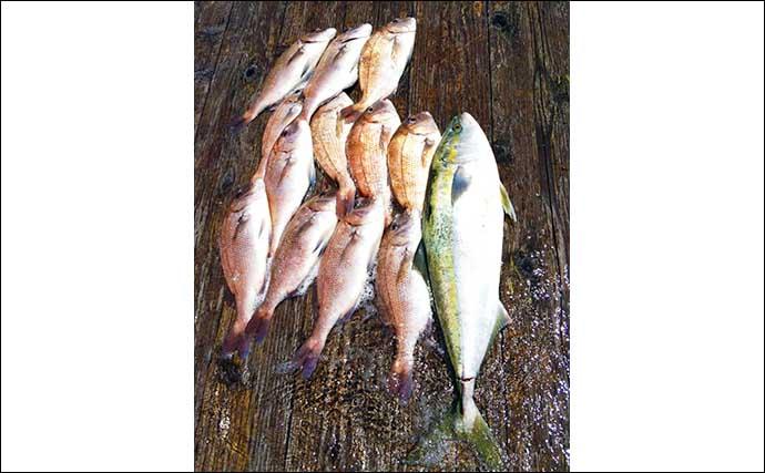 【愛知・三重】海上釣り堀最新釣果 ファミリーでマダイ29匹の数釣り