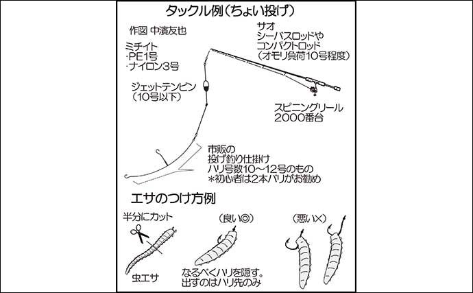 【九州2020夏】投げキス釣りのキホン 数釣り可能で入門に最適シーズン