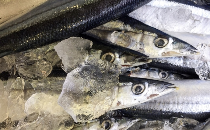 2020年の秋の『サンマ漁』が解禁 昨年以上の不漁予測で今後に不安