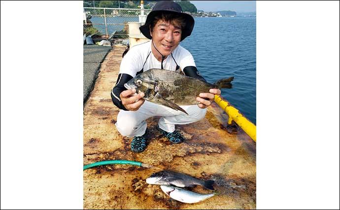 【福井・三重】海上釣り堀最新釣果 高級魚イシダイにシマアジ登場